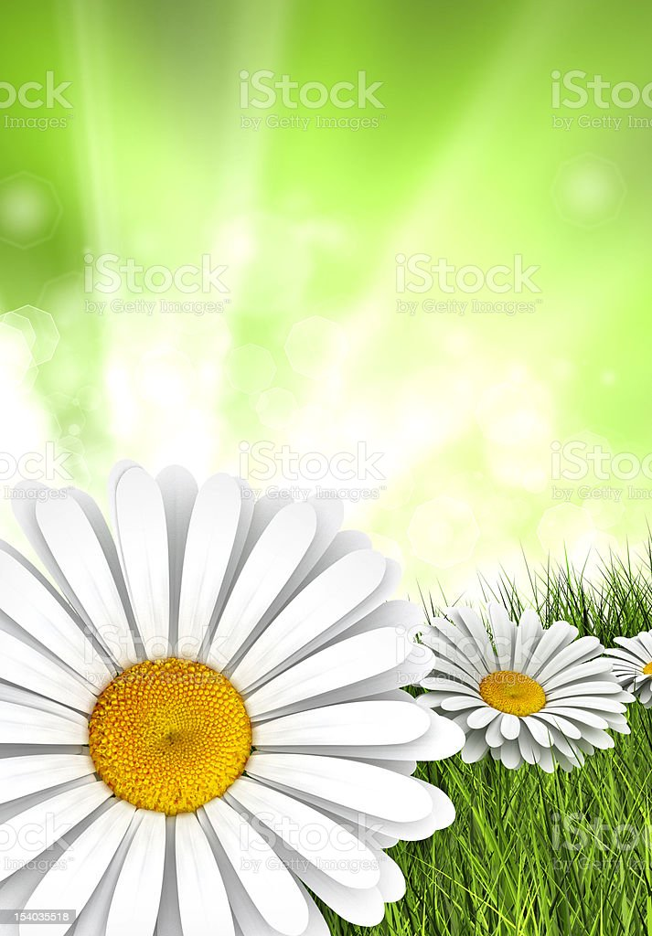 Nature background - daisies on green meadow royalty-free stock photo