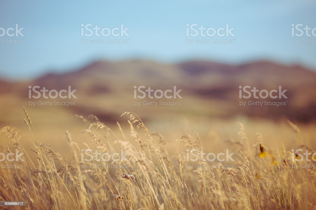 Nature Background - Golden brome grass in foreground with blurred mountains behind stock photo