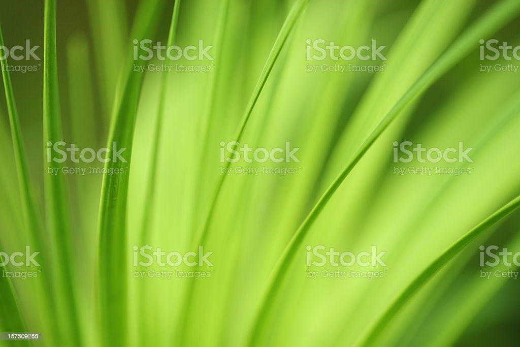 Nature background long leafs royalty-free stock photo