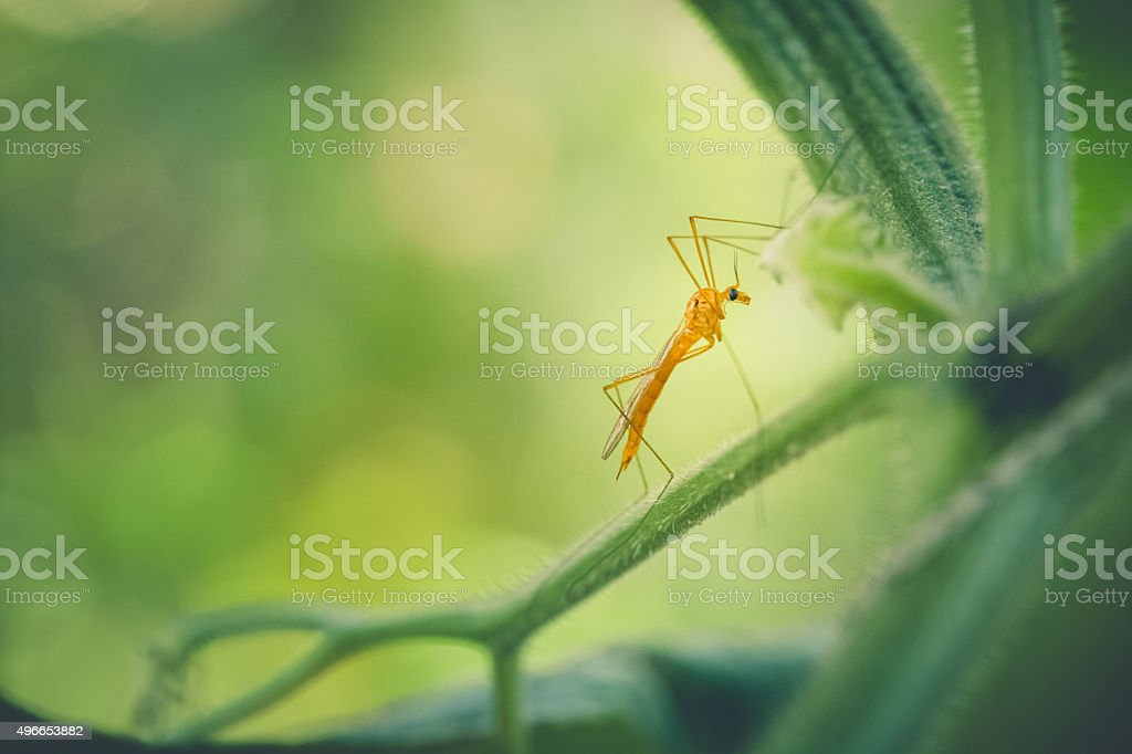 Nature Background - Long Legged Insect On Plants In Garden stock photo