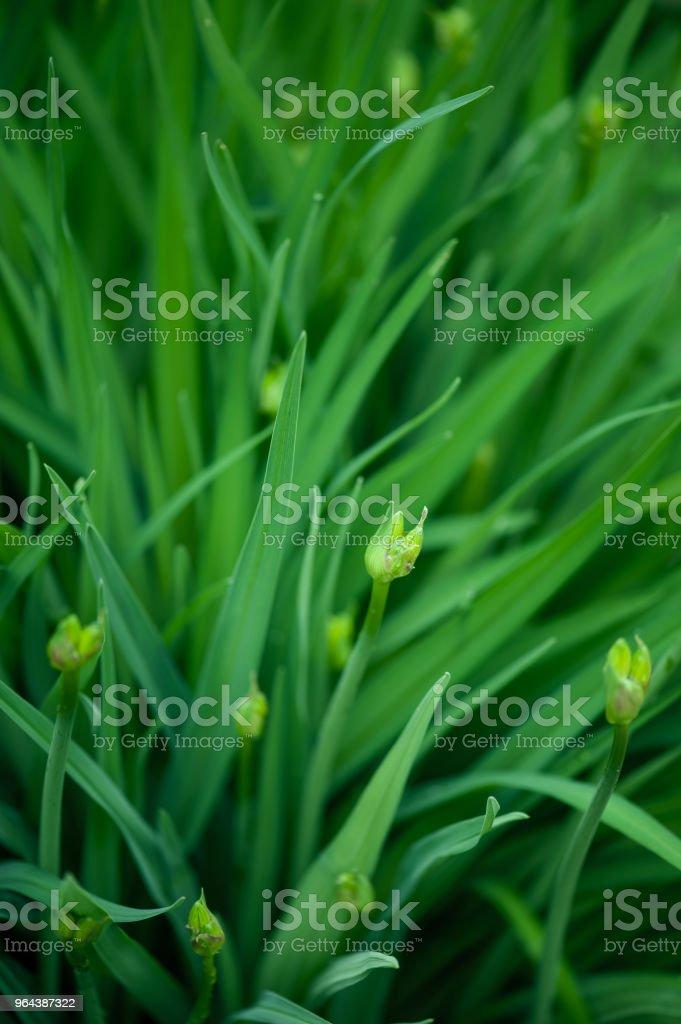 Natuur achtergrond van tuinplanten - Royalty-free Abstract Stockfoto