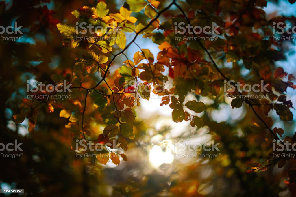 part of nature royalty-free stock photo