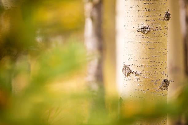 Natur Hintergrund – Foto