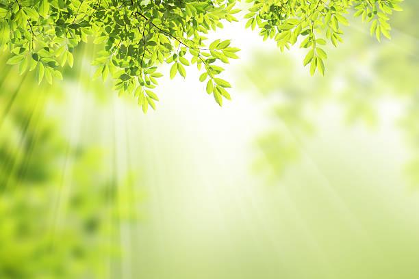 自然の背景。 - 木漏れ日 ストックフォトと画像