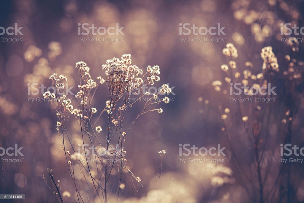 Nature Background - Soft  Dreamy Fall Vegetation in Brown Tones stock photo