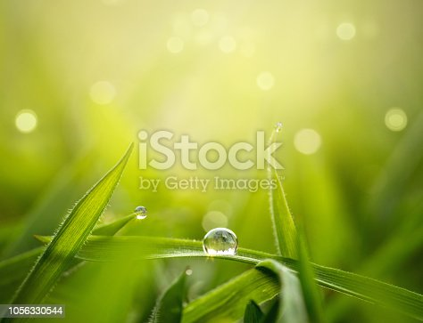 Spring, nature background. Water drop on a blade of grass with copy space