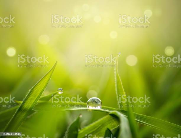Photo of Nature background with copy space