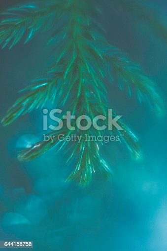 850558406 istock photo Nature background with greenery and bokeh 644158758