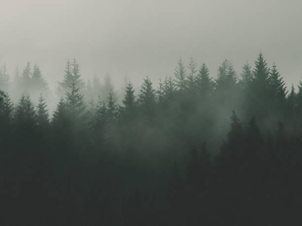 fondo natural con bosque Vintage temperamental - foto de stock