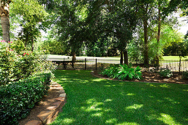 nature:  backyard overlooking golf course.  flowerbeds and shrubs. - skuggig bildbanksfoton och bilder
