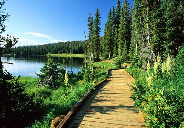 promenade dans la nature - lac mirror lake photos et images de collection