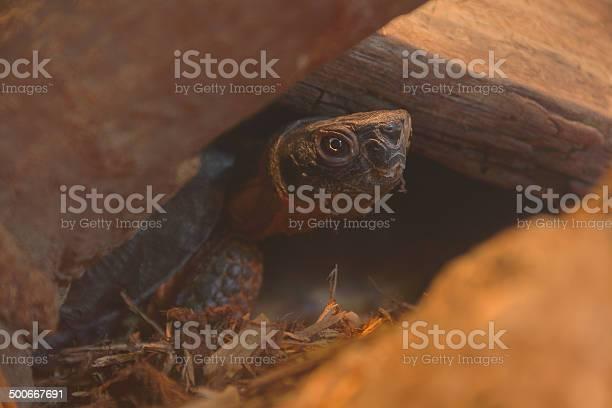 Nature box turtle picture id500667691?b=1&k=6&m=500667691&s=612x612&h=ewpmhl adt1u5jcqif0s1xbjh99da5niustkbqgctqg=