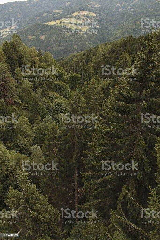 nature, countryside, woodland, latitude,climb royalty-free stock photo