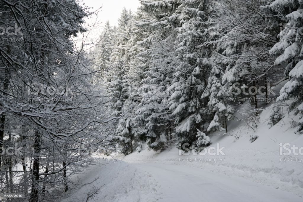 Nature covered in snow during winter. photo libre de droits