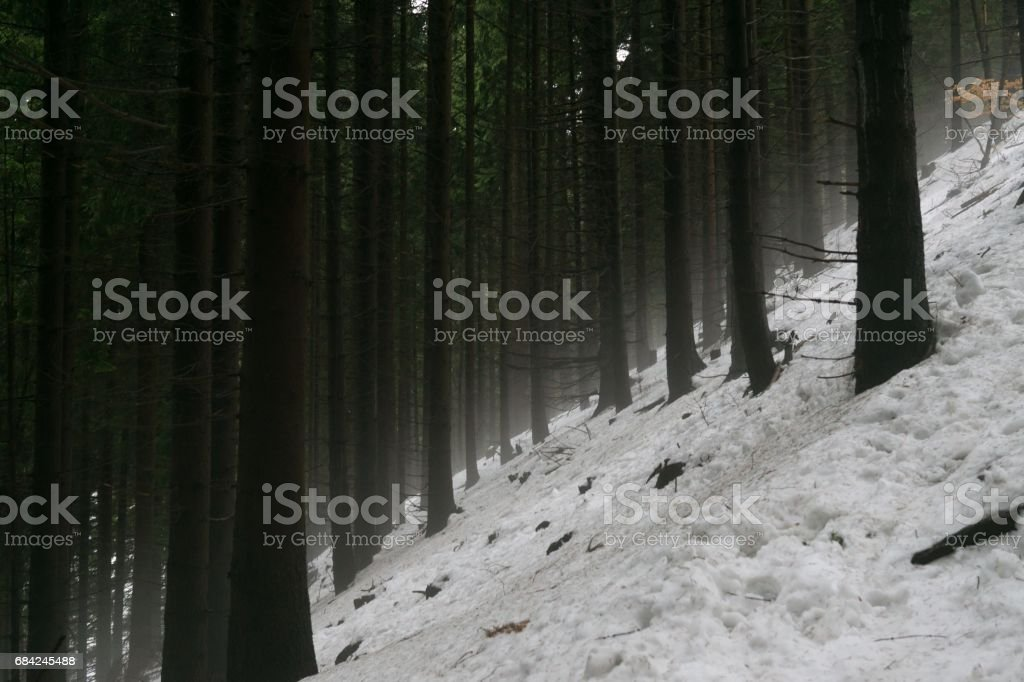 Nature covered in snow during winter. 免版稅 stock photo