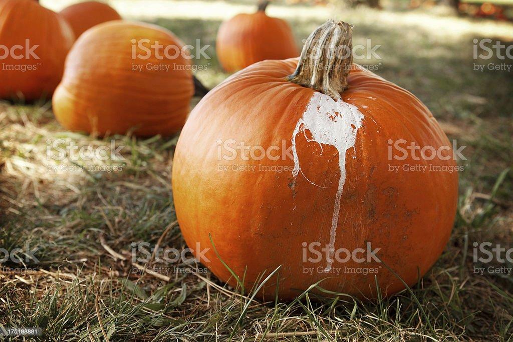 Nature Decorated Pumpkin stock photo