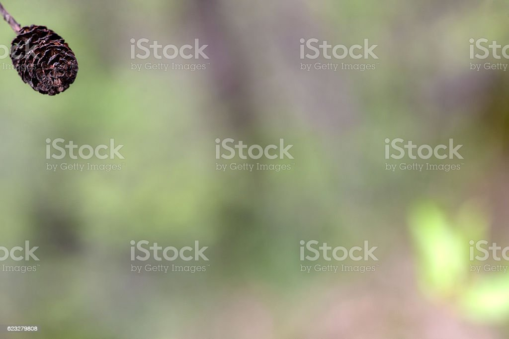 Nature detail stock photo