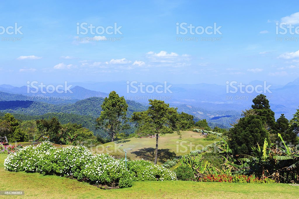 nature environment with flower on top mountain at Huenamdang Forest stock photo