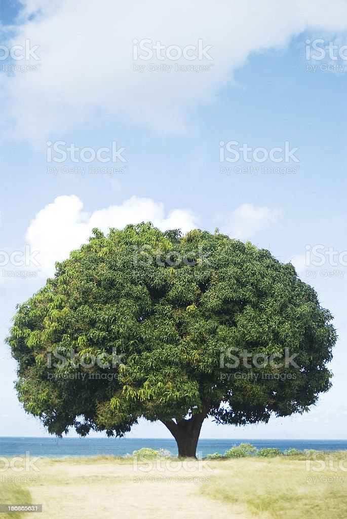 nature field and tree royalty-free stock photo