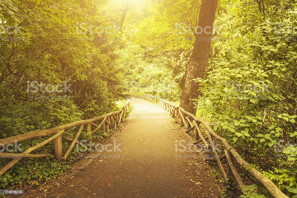 Nature Footpath royalty-free stock photo