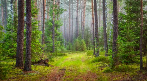 nature forest landscape. green summer forest - woodland stock pictures, royalty-free photos & images