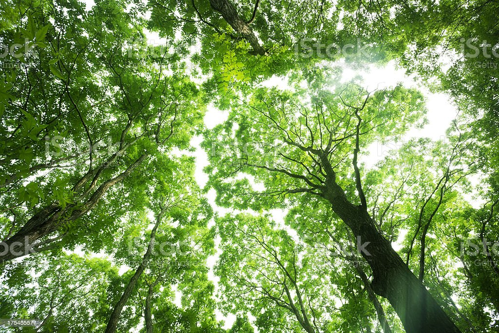 Nature forest royalty-free stock photo