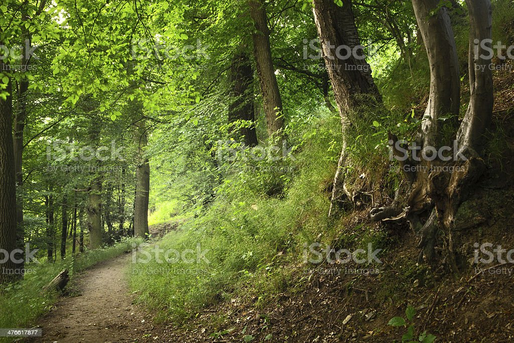 Nature: Forest royalty-free stock photo