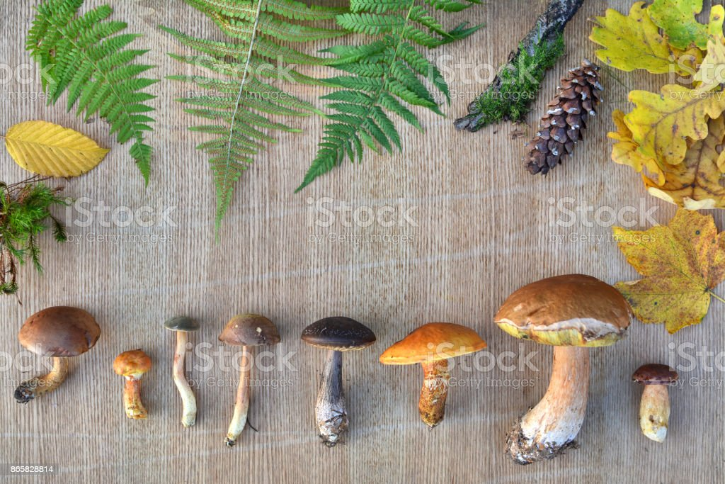 Nature frame of edible forest mushrooms, leaves and cones stock photo