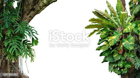 Nature frame of jungle trees with tropical rainforest foliage plants (Monstera, bird