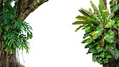Nature frame of jungle trees with tropical rainforest foliage plants (Monstera, bird\