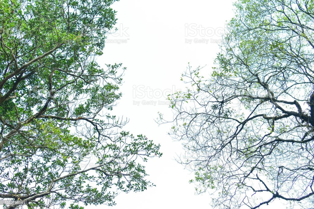 Nature Frame Of Jungle Trees With Tropical Rainforest Foliage Plants Growing In Wild Isolated On White Background Hd Image And Large Resolution Can Be Used As Desktop Wallpaper Stock Photo Download