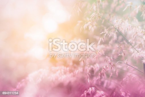nature grass flower field in soft focus , pink green pastel background with sunlight