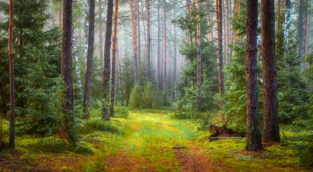 Nature green forest landscape Nature green forest landscape. republic of karelia russia stock pictures, royalty-free photos & images