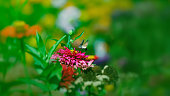 beautiful butterfly flying over a flower, closeup. Spring. Nature. Sunny day. Wallpaper. Background