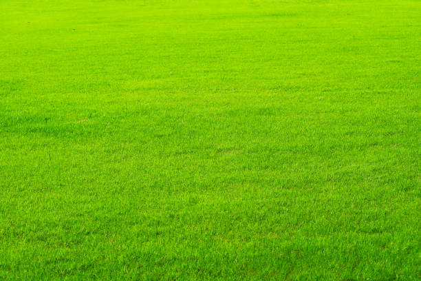 nature green grass in the field background stock photo