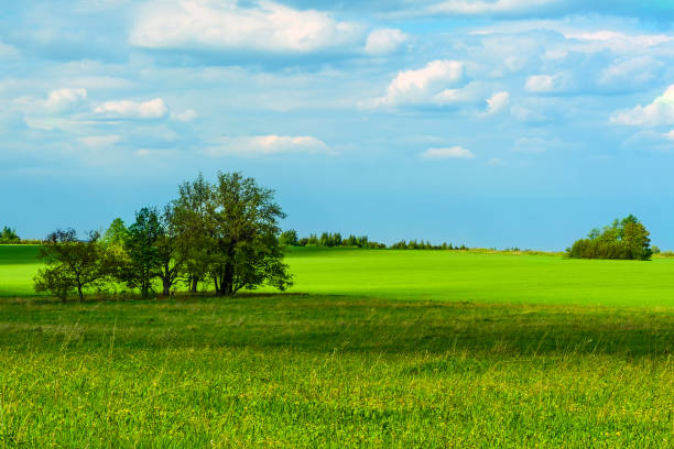 Natur grüne Landschaft – Foto