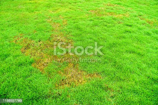 Pests and disease cause amount of damage to green lawns, lawn in bad condition and need maintaining.