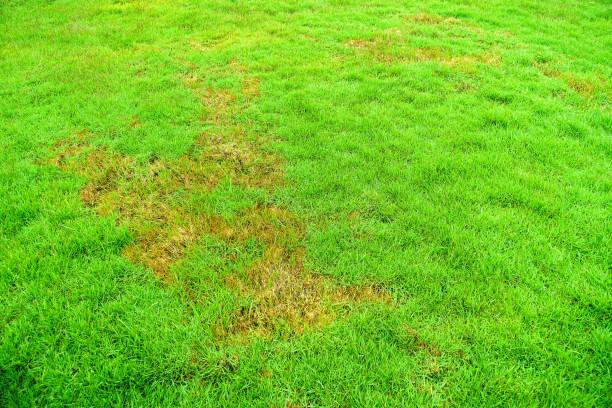 자연, 녹색 잔디, 잔디, 배경, 표면, 썩은, 병원 체 - 균류 뉴스 사진 이미지