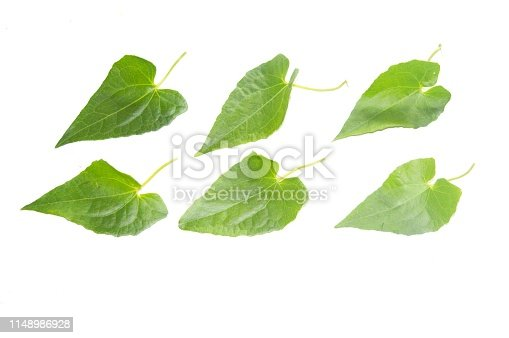 istock Nature green leaves with bright background isolated. 1148986928