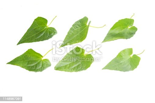 istock Nature green leaves with bright background isolated. 1148987091