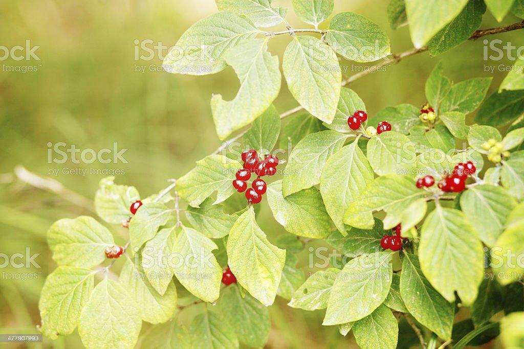 nature green royalty-free stock photo