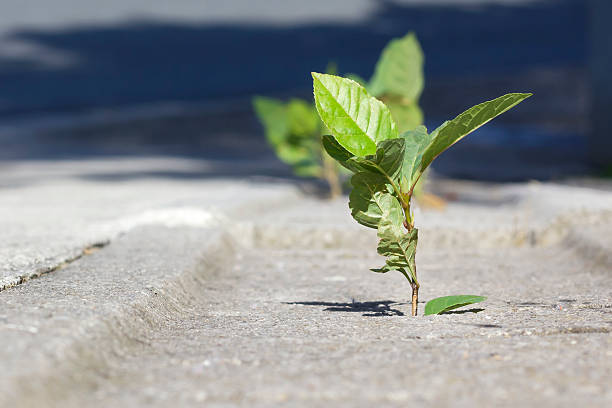 Nature growing in the city - foto de stock