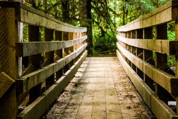 Nature Hike Foot Bridge stock photo