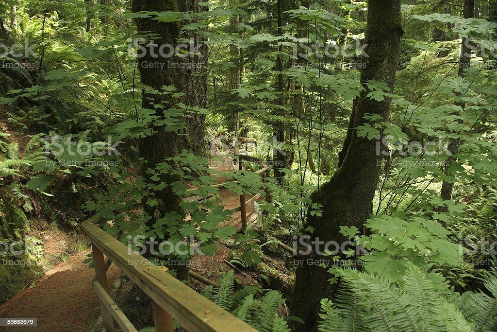 Nature Hike royalty-free stock photo