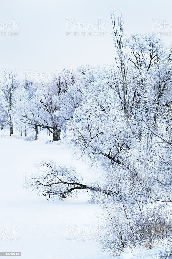 Nature Hoar Frost Winter Scenery by the Lake royalty-free stock photo