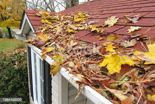 Nature... This shot, shows a rooftop with gutters, badly in need of cleaning.