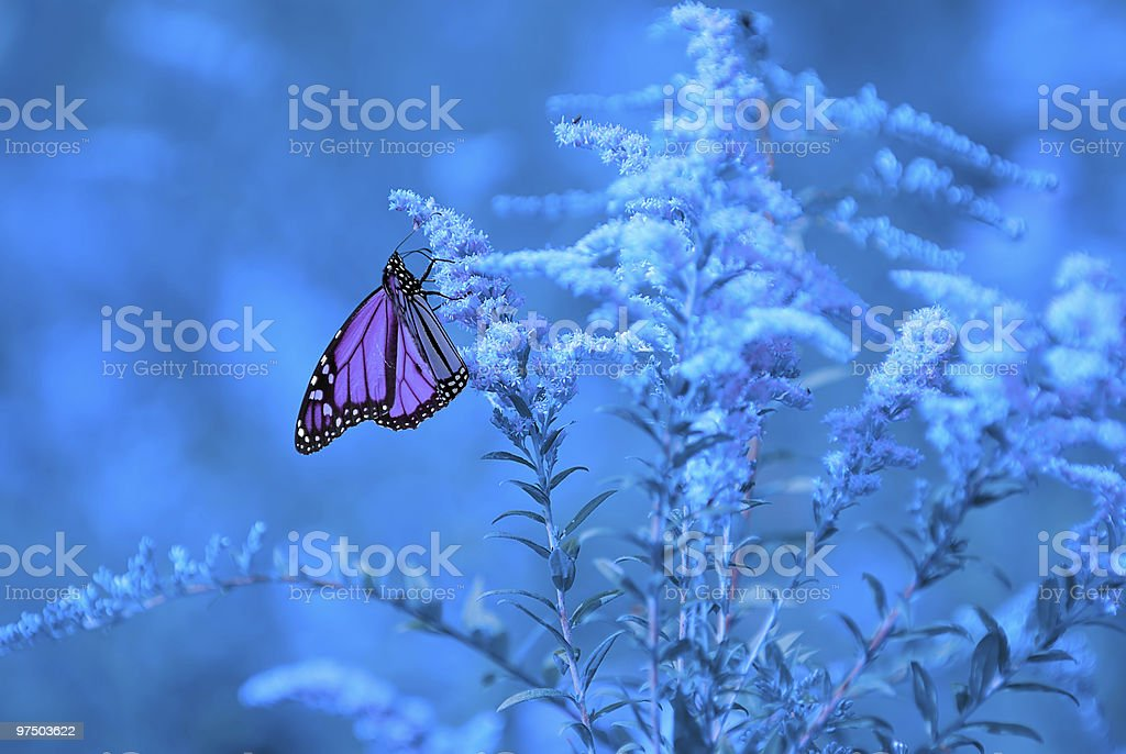 Nature in Blues 3 royalty-free stock photo