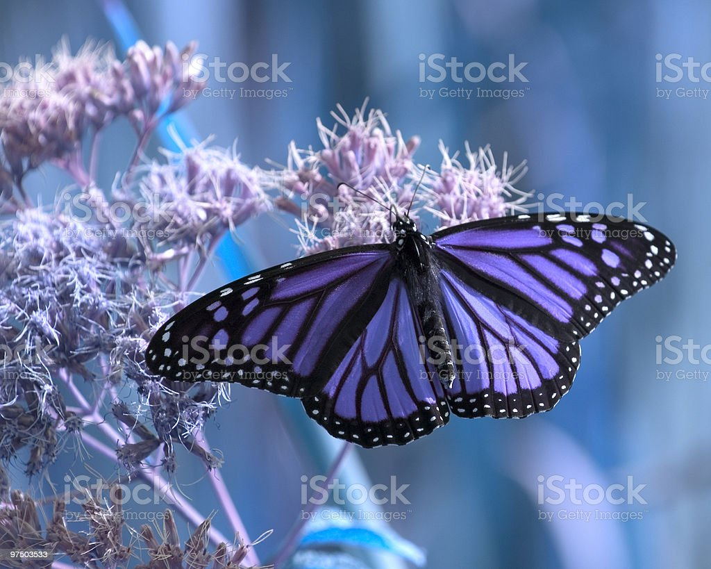 Nature in Blues royalty-free stock photo