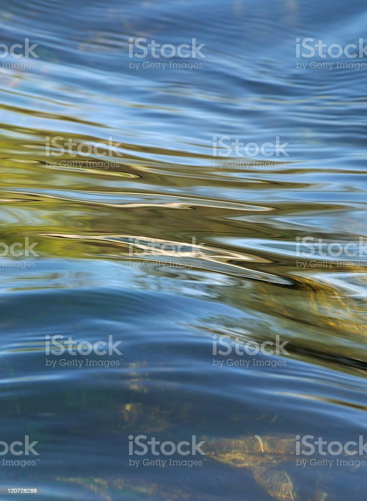nature in detail royalty-free stock photo