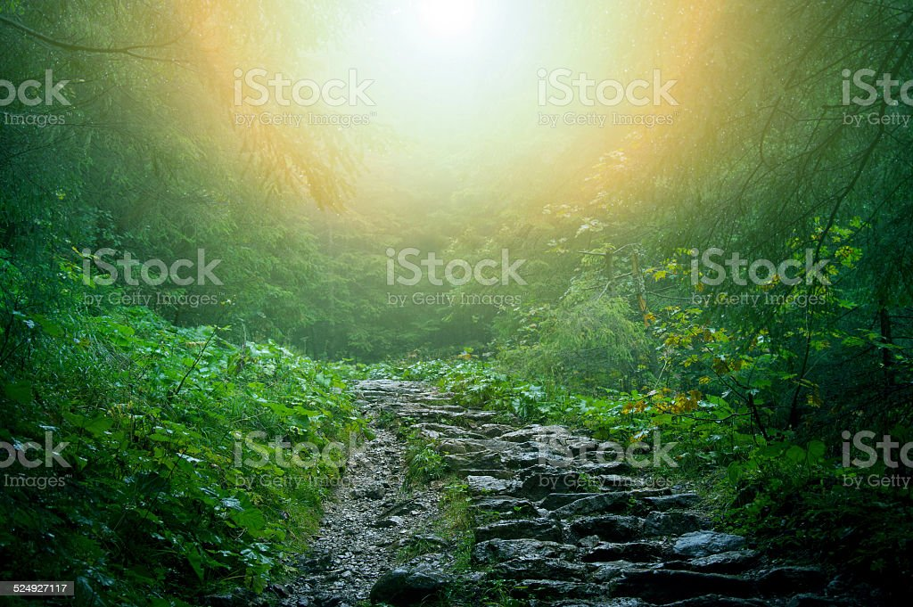 Nature in forest. stock photo
